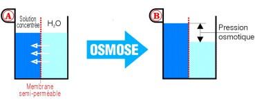 Schéma osmose
