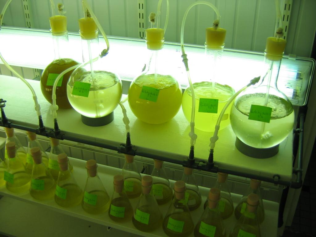 Culture du phytoplancton (1)
