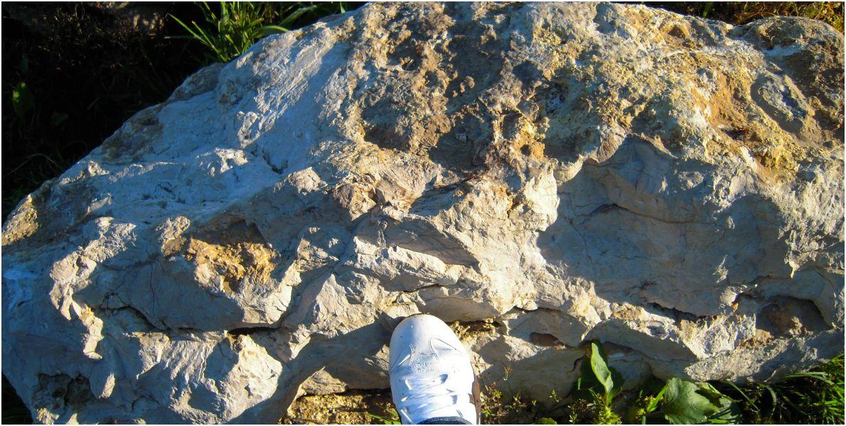 Calcaire de Pithiviers