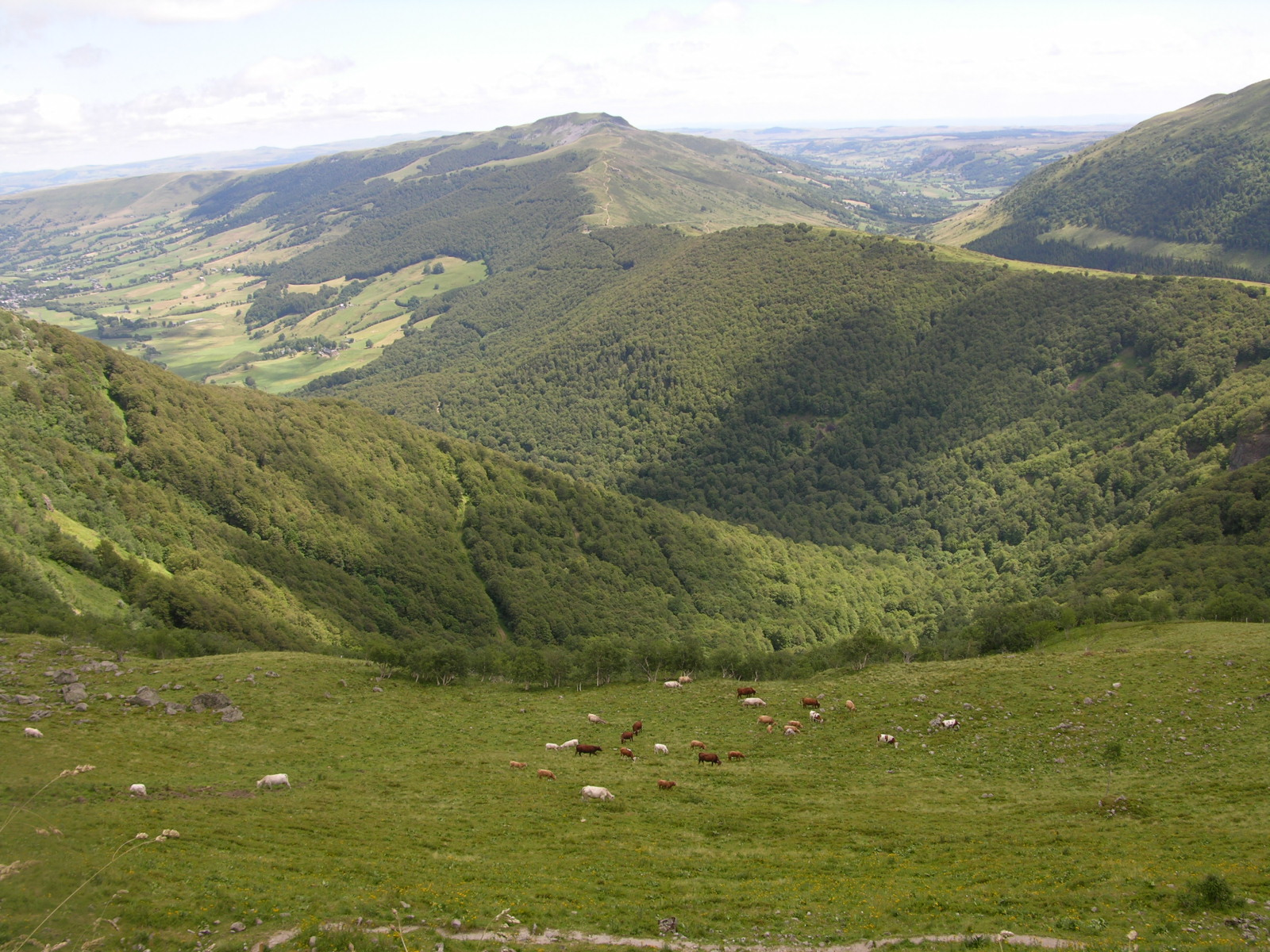 Monts du Cantal.JPG
